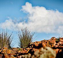 On A Hillside  by Pene Stevens