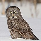 Bright eyes by Heather King