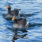 Ducks in water by mjamil81