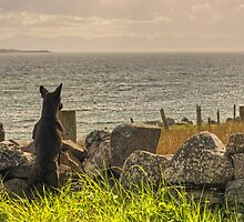 The Scottish Terrier by Jamie  Green