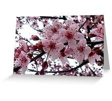 Peach flowers in the rain Greeting Card