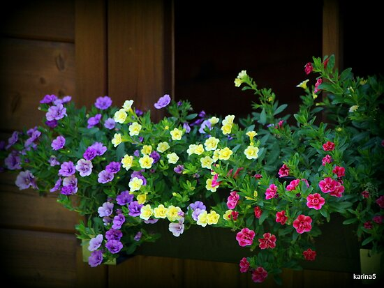 Flower Box by karina5