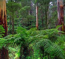 Strzelecki Rainforest. by Bette Devine