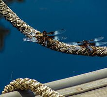 Dragonflies by saratobin