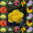 Vibrant Summer Flowers Collage by Kathryn Jones
