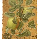 Vintage Apples & Ephemera Collage Design - Vintage Look Greeting Card - Apples by traciv