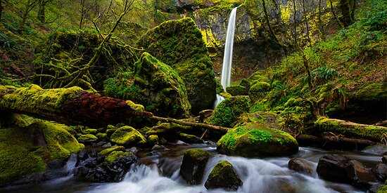 Green Seasons by Chad Dutson