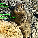 """Nuts About You"" by Gail Jones"