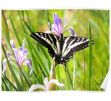 Pale Tiger Swallowtail Butterfly Poster