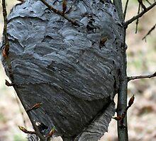 Bee's Nest - British Columia Canada by Natasha Litia