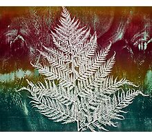 Printmaking: Forthcoming Fern Photographic Print