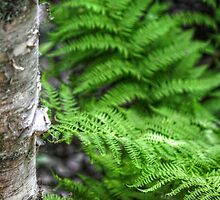 Fern I by EelhsaM