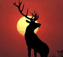 Elk by rapplatt