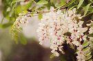 Popcorn Tree by KBritt