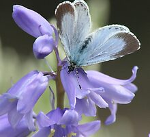Blue bells with a Blue butterfly by macawmad
