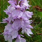Purple Orchid by Jennifer J Watson