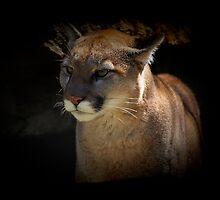Mountain Lion Cougar Wildlife Gifts by Val  Brackenridge