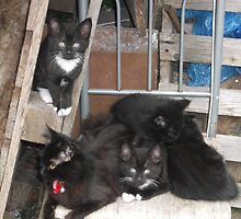 Cat/Kittens -(200613)- Digital photo/Fujifilm FinePix AX350 by paulramnora