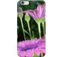 Purple And Pink Daisy Flower in Full Bloom iPhone Case/Skin