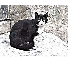 Black Cat in Sighisoara, Draculya's city Photographic Print