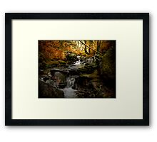 Beauty Under The Trees Framed Print