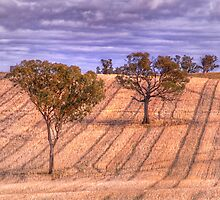 Lines - Somewhere In The Riverina - The HDR Experience by Philip Johnson