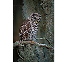 Florida Barred Owl In Spanish Moss Photographic Print