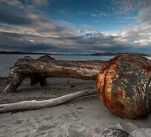 Things That Wash Up On The Beach - Ruston Way - WA, U.S.A. by Vincent Frank