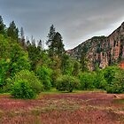 Red Weeds in Sedona by Diana Graves Photography