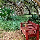 The Zen Of A Bench by Susan Bergstrom