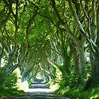 Dark Hedges  by Sean McAughey