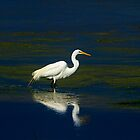 The  Egret by john forrant
