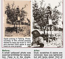 Restoration 1920c ~ Apple Picking in Tallong NSW  by Baina Masquelier