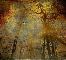 Silent Sun by Susan Werby