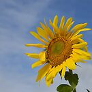 Sunflower by Jennifer Eurell