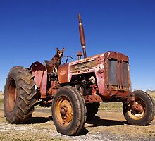 Tractor hound by Penny Kittel