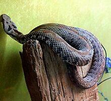 Beautiful Snake by mrfriendly