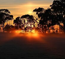 Crack o dawn. by Jeanette Varcoe.