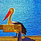 Private Pelican by wallarooimages