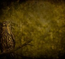 Barking Owl by Shari Mattox