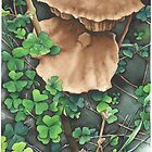 Woodland Mushrooms -Aquamarkers by Gee Massam