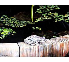 CHILLIN' AT THE LILY POND Photographic Print