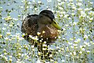 Flower Duck by Jo Nijenhuis