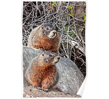 Mount Marmot Poster