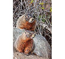 Mount Marmot Photographic Print