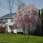 Spring tree in Muncy, PA by BearheartFoto