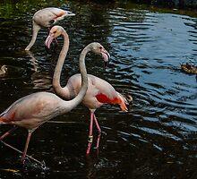 The Flamingo Knot by michaelhelm