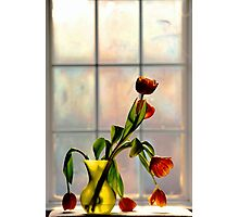 Tulips in Window Light.. Photographic Print