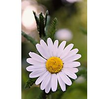 Daisy Photographic Print