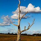bright lone tree by outbacksnaps